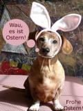 Treue Ostergrüße :)